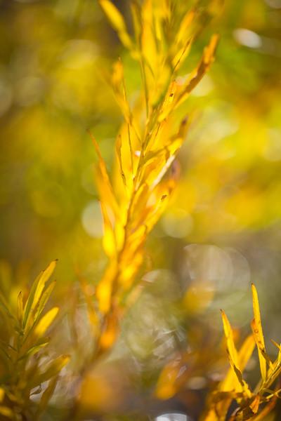 20151024-Fall Colors-114.jpg
