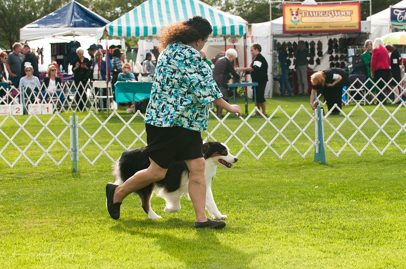 20170114_Kachina Kennel Club_Aussies-31.jpg
