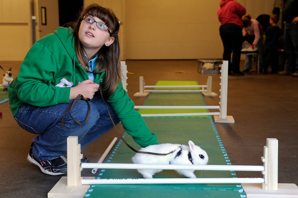 . BRIGHTON, CO - MARCH 25: Morgan Barba, 10, looks to her mother, Sarah Barba (not pictured) to get advice on her rabbit, Marcus during hopping practice at the Adams County Fairgrounds Event Center on March 25, 2014, in Brighton, Colorado. Sarah Barba leads the Adams County Rabbit Hopping group, which is made up of eleven youngsters who participate in 4-H projects through Adams County. They are training for the Adams County Fair which will take place at the end of July. (Photo by Anya Semenoff/The Denver Post)