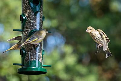 2019-07-12 Bird feeding