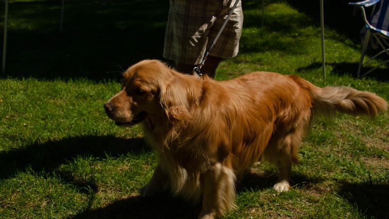 PuppyParty18-46.jpg