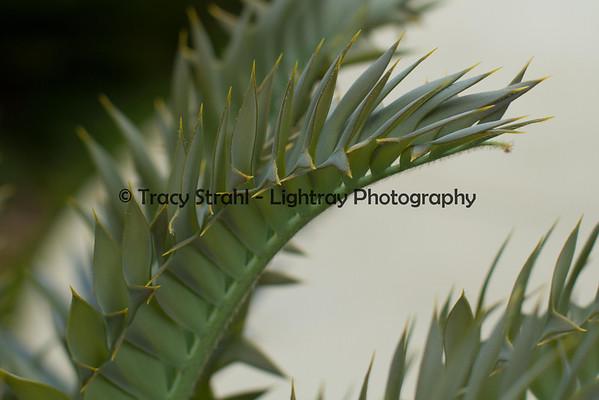 Encephalartos Horridus and other plants 05-25-2012