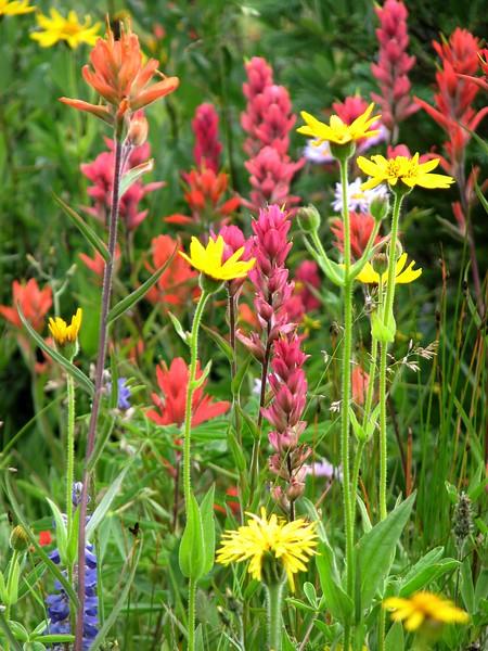 amh FLOWERS (1326).jpg