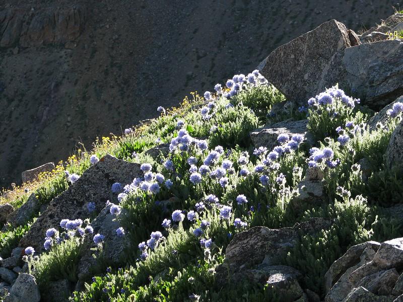 amh FLOWERS (1404).jpg