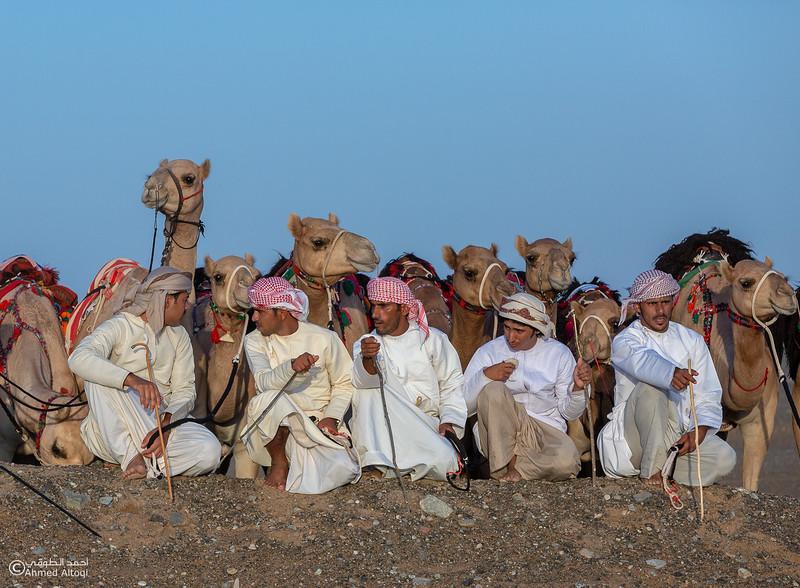 FE2A3504- Camel Race.jpg