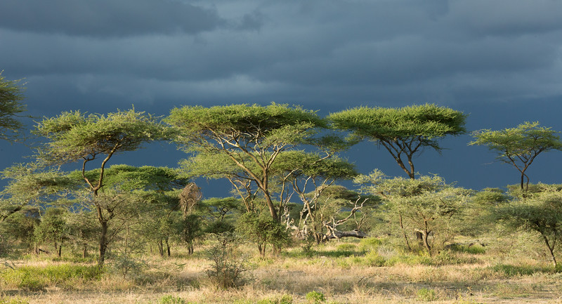 Tanzania_2D4A4860-Edit.jpg