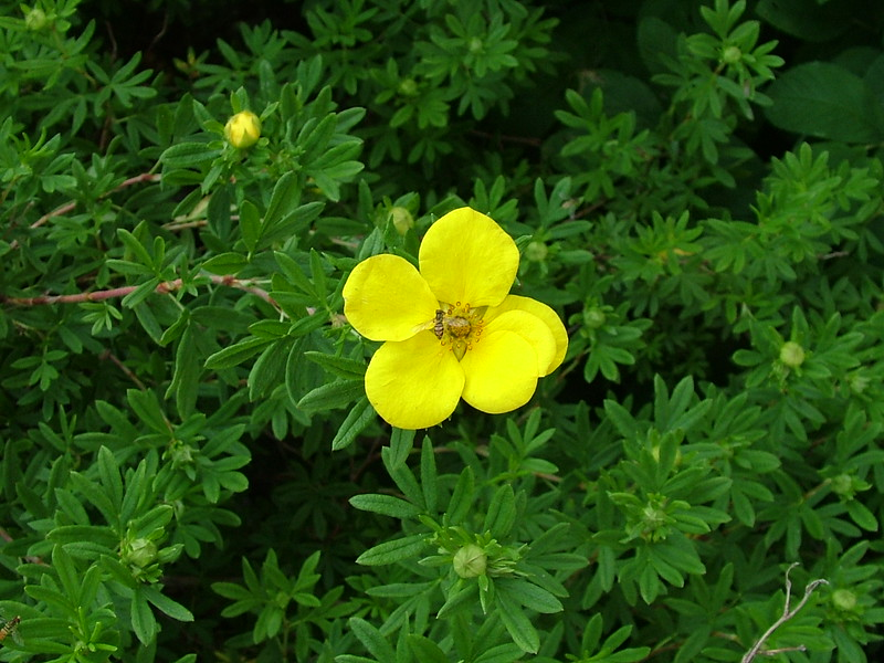 flower 209.jpg