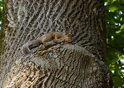 squirrel 2011