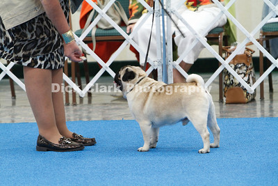 Best of Breed 3rd Judging Class - Dogs