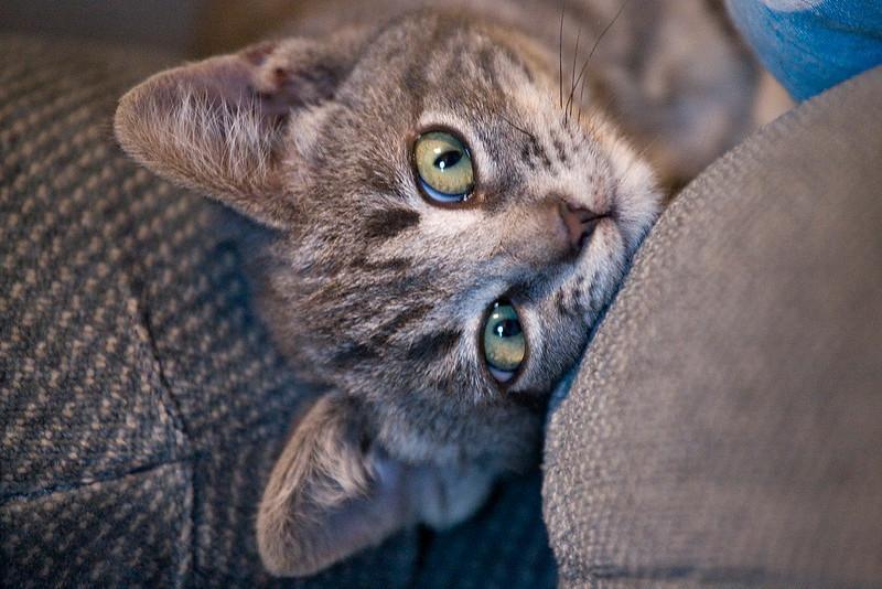 new-kitty-04.jpg