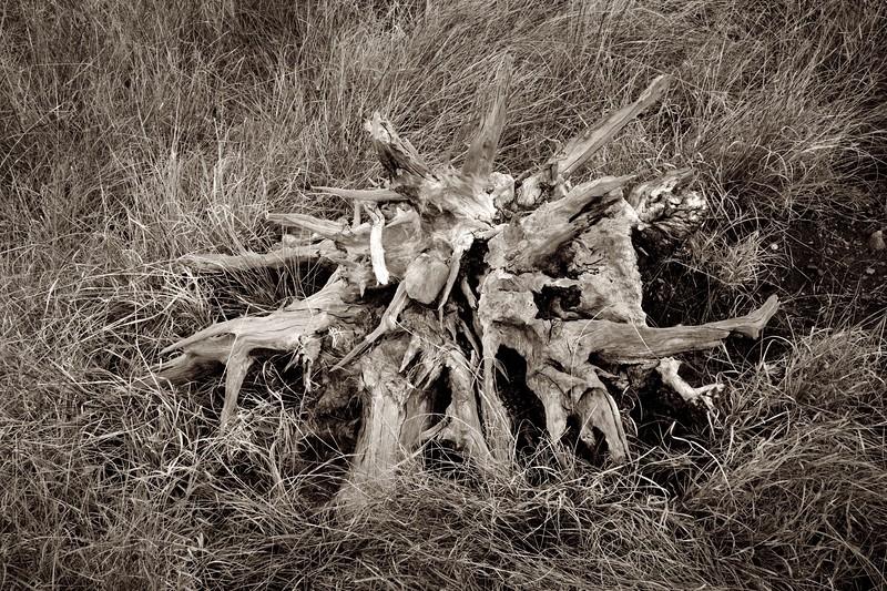 C Photo Lenswork 2007-11-17 Wood Study 2990.jpg