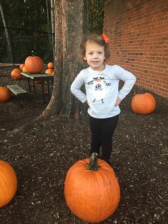 Primrose Pumpkin Fairy 2017