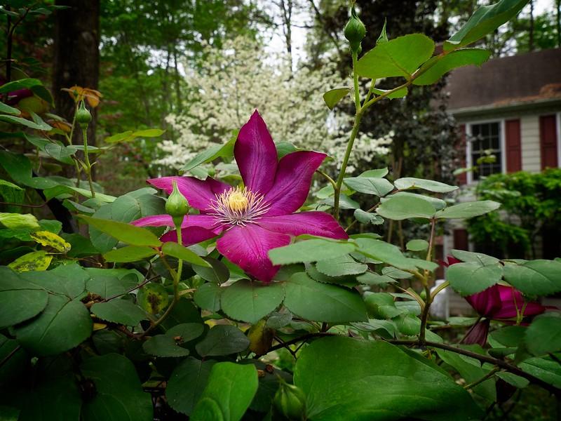 Garden_apr14-4140018 copy.jpg
