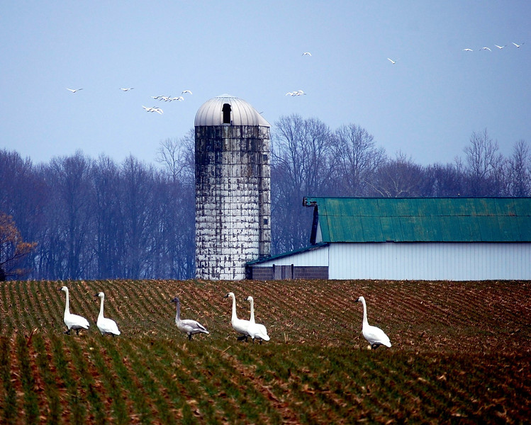 Winter Farm 1