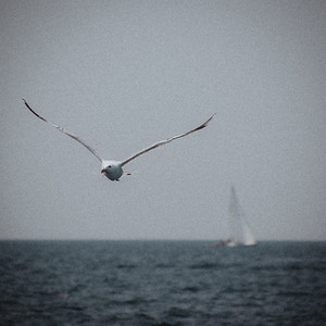 The Seagull and the Boat
