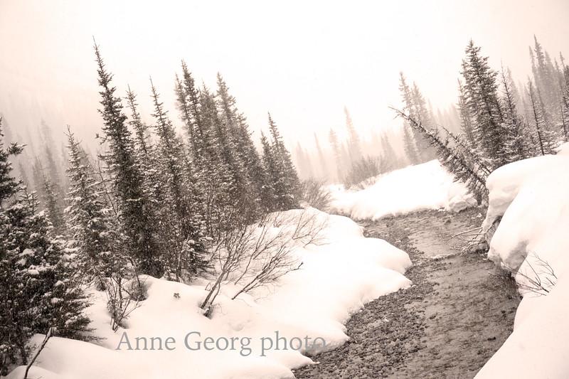 winterwonderland tinted.jpg