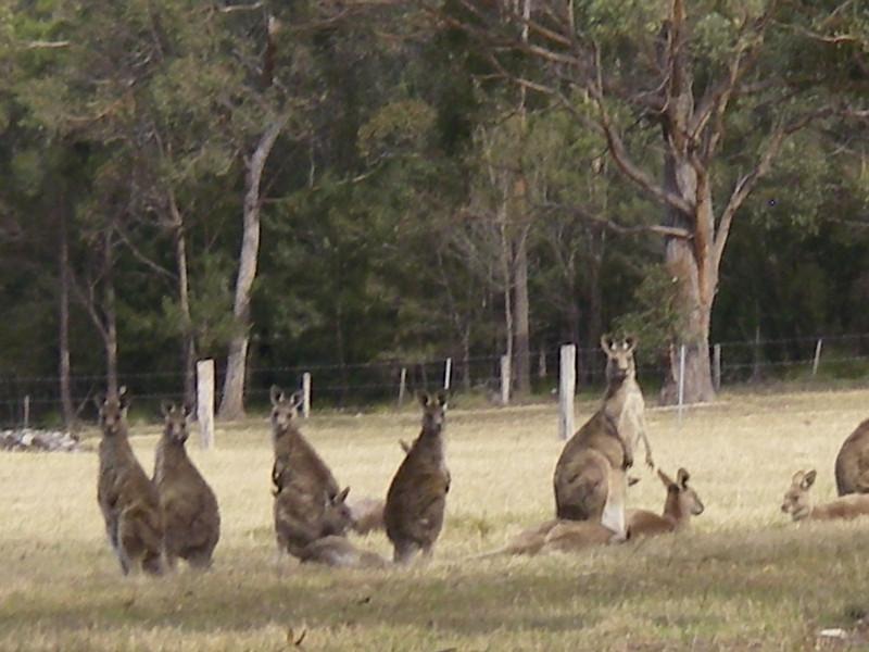 Sydney trip and Mirimbula 120.JPG