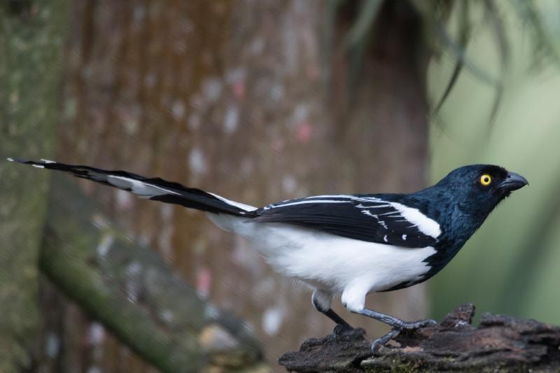 19-Sept Brazil Birds-7537.JPG