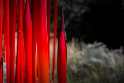 Denver Botanic Gardens / Macro
