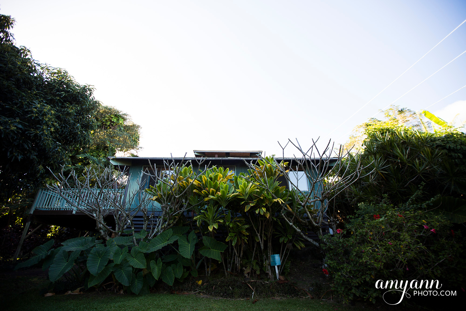 hawaii_amyannphoto_43