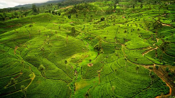 Sri Lanka - Ceylon Tea Trails & Coast
