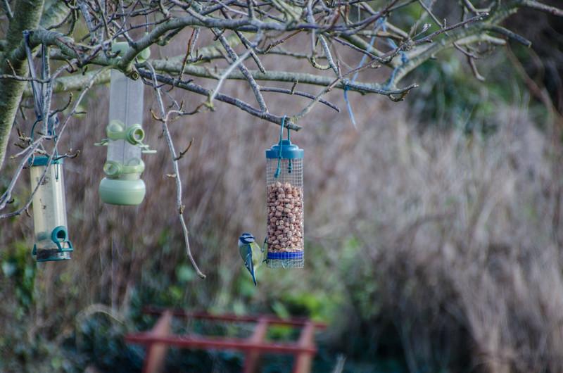 Birds 180118-57.jpg