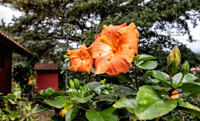 Tropical Flowers & Fruit Trees