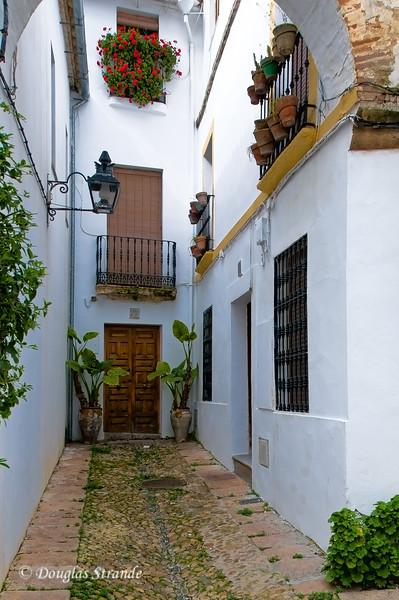 Thurs 3/10 in Cordoba: Geraniums