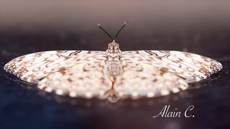 PapillonPretDecollage_ALR2656.jpg