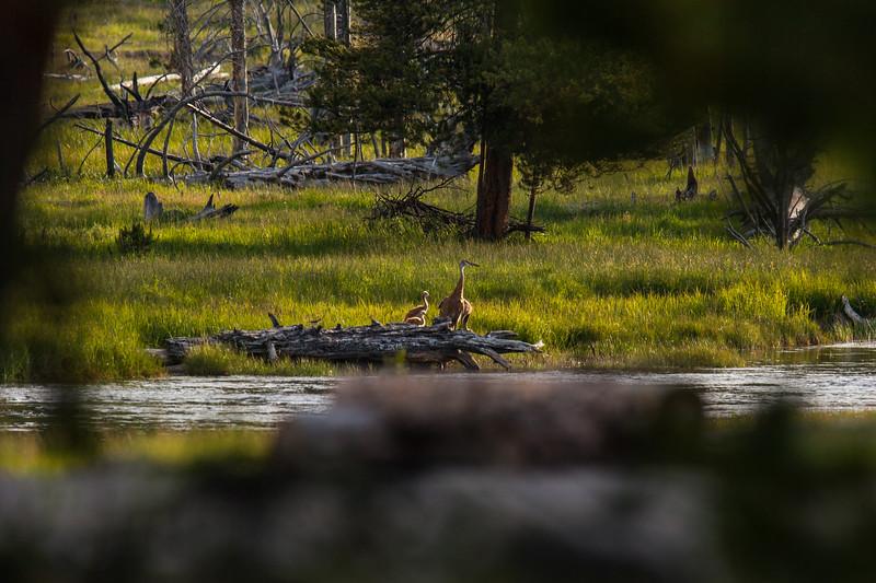 Yellowstone Misc-35.jpg