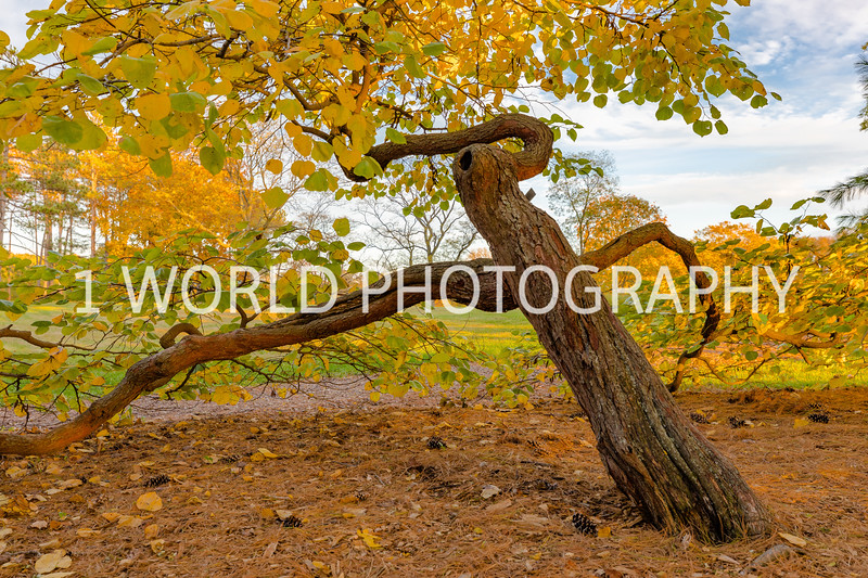 Morton Arboretum Fall 2017-42-2-13.jpg