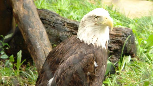 2009 World Famous Topeka Zoo