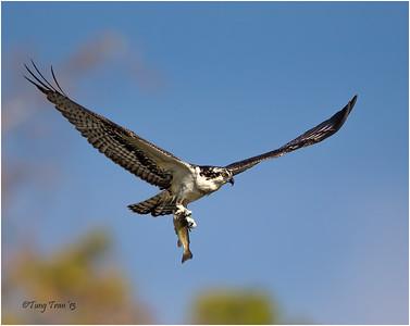 Bird Action Dec 2013