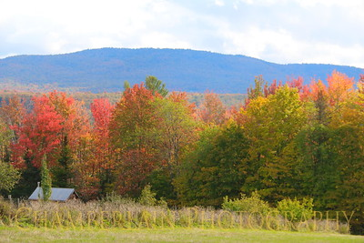 Fall in Vermont - 2017