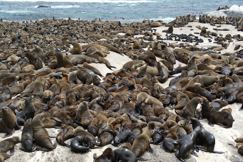That's a lot of damn seals.