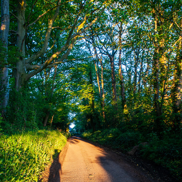 Shadows on a country lane
