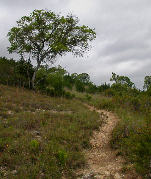 hillside trail and tree.jpg
