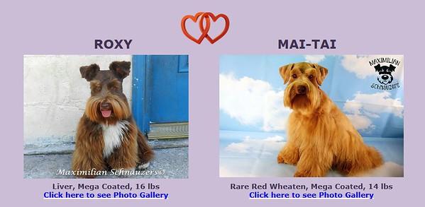 Roxy & Mai-Tai Puppies, DOB 5/15/2021