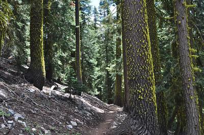 Reawakening of the trees