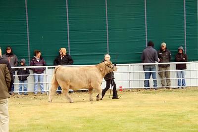 Junior Beef Showmanship