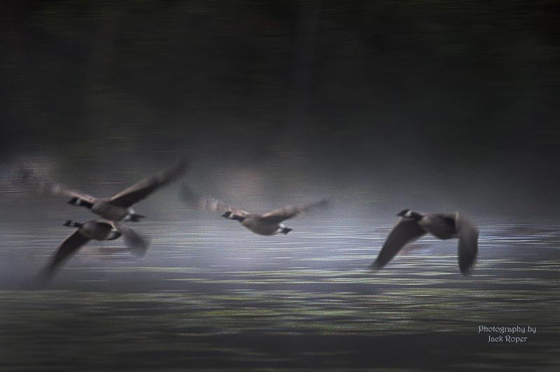 Geese flight in fog _7358 - Copy.jpg