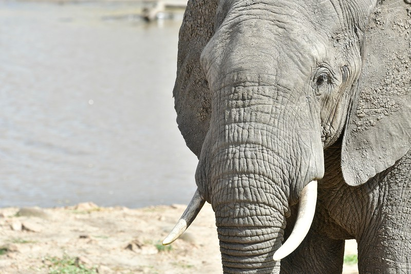 Elephants108.jpg