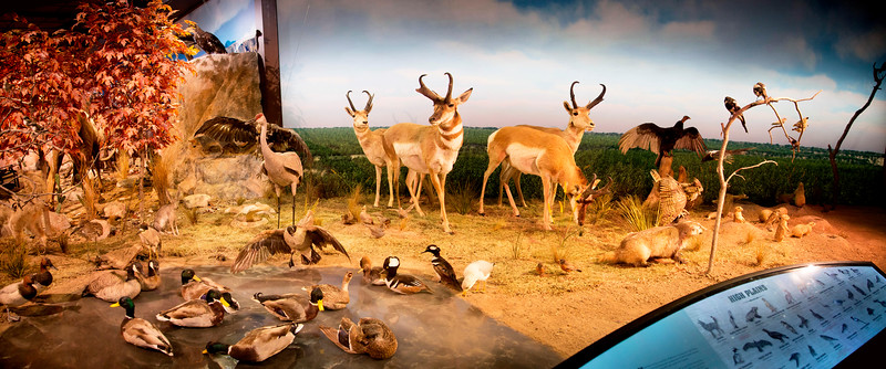 Diorama of Texas Wildlife