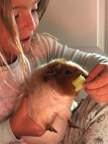 Abby and Christian, Babysitting Guinea Pigs from LGPNS