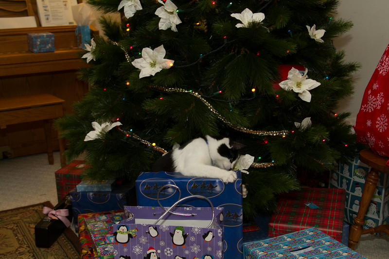 Christmas Day 2012-7112.jpg