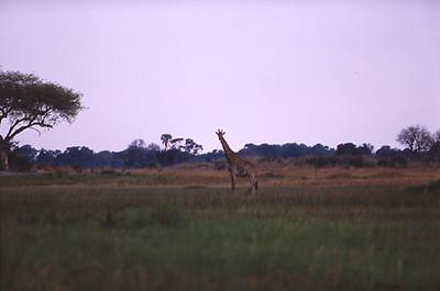 africa0068.jpg