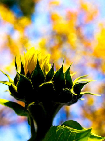 sunflowerpaintography.jpg