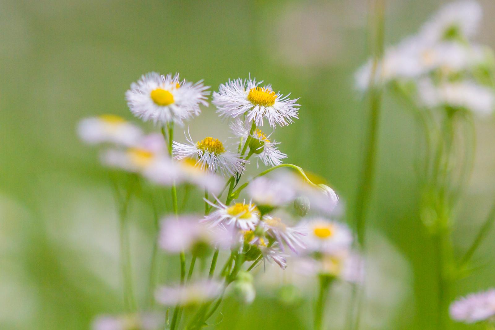 镜头里的路边小花
