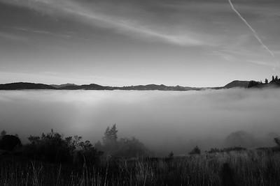 Humboldt Fog