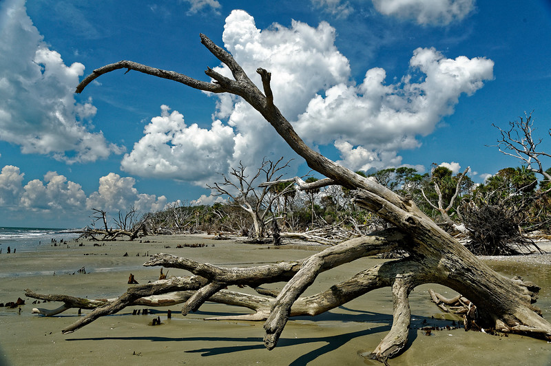 Low Tide Botany Bay